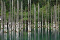 Βυθισμένο δάσος στα βουνά Στοκ Εικόνες