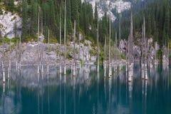 Βυθισμένο δάσος στα βουνά Στοκ φωτογραφία με δικαίωμα ελεύθερης χρήσης