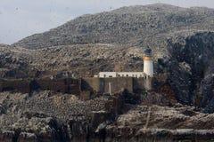 Βόρεια αποικία gannet γύρω από το φάρο, βαθύς βράχος, Scotlan Στοκ φωτογραφία με δικαίωμα ελεύθερης χρήσης
