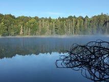 Βόρεια ξύλα Στοκ φωτογραφίες με δικαίωμα ελεύθερης χρήσης