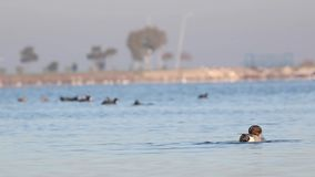 Βόρεια πλύση σουβλόπαπιων στην καθαρή θάλασσα απόθεμα βίντεο