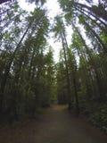 Βόρεια τροπικά δάση Στοκ Φωτογραφίες