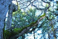 Βόρεια τροπικά δάση Στοκ εικόνα με δικαίωμα ελεύθερης χρήσης