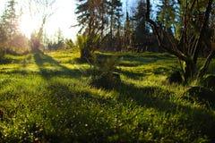 Βόρεια τροπικά δάση Στοκ φωτογραφία με δικαίωμα ελεύθερης χρήσης