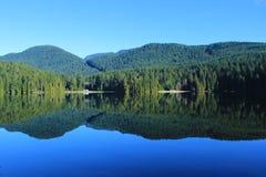 Βόρεια τροπικά δάση Στοκ Φωτογραφία