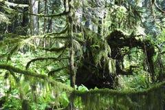 Βόρεια τροπικά δάση Στοκ εικόνες με δικαίωμα ελεύθερης χρήσης
