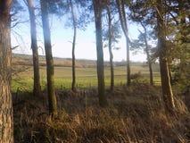 Βόρεια Northumberland, δασώδης περιοχή, Αγγλία, UK στοκ φωτογραφίες
