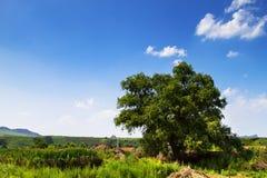 Βόρειο αγροτικό τοπίο το καλοκαίρι μεσημβρίας Στοκ φωτογραφίες με δικαίωμα ελεύθερης χρήσης