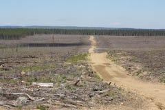 βόρειο δάσος αποκοπών ομά Στοκ Εικόνες