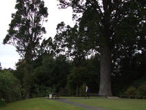 Βόρειο νησί Νέα Ζηλανδία Στοκ φωτογραφίες με δικαίωμα ελεύθερης χρήσης