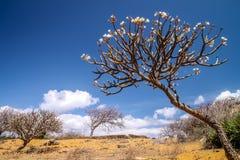 Βόρειο τοπίο της Μαδαγασκάρης Στοκ Εικόνες