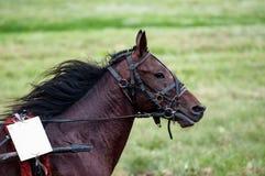 βόρειο pyatigorsk αλόγων ιπποδρόμων Καύκασου που συναγωνίζεται τη Ρωσία Στοκ Εικόνες