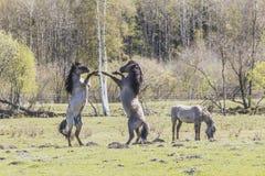 βόσκοντας άγρια περιοχές Στοκ φωτογραφία με δικαίωμα ελεύθερης χρήσης