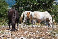 βόσκοντας άλογο επαρχία& Στοκ εικόνα με δικαίωμα ελεύθερης χρήσης