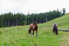 Βόσκοντας άλογα στη βουνοπλαγιά Στοκ Εικόνα