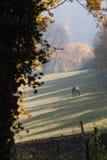 Βόσκοντας άλογο Στοκ εικόνα με δικαίωμα ελεύθερης χρήσης