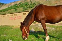 Βόσκοντας άλογο Στοκ φωτογραφίες με δικαίωμα ελεύθερης χρήσης