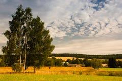 βόστρυχος πρωινού Στοκ Φωτογραφίες