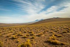 Βλάστηση και βουνά ερήμων Atacama - Χιλή Στοκ Εικόνες