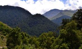 Βλάστηση Καύκασος βουνών Στοκ φωτογραφία με δικαίωμα ελεύθερης χρήσης