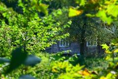Βλάστηση σπιτιών στο κέντρο Στοκ φωτογραφίες με δικαίωμα ελεύθερης χρήσης