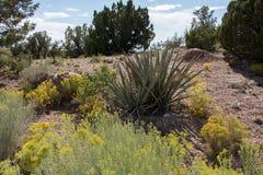 Βλάστηση στο Νέο Μεξικό Στοκ φωτογραφία με δικαίωμα ελεύθερης χρήσης