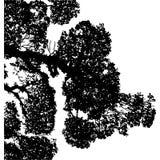 Βλάστηση Στοκ Εικόνες