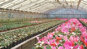Βλέμμα του gardenhouse με τα λουλούδια 4K απόθεμα βίντεο