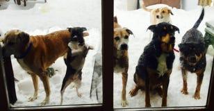 Βλέπω έξι σκυλιά Στοκ εικόνα με δικαίωμα ελεύθερης χρήσης