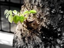 Βλαστάνοντας νέα φύλλα Στοκ φωτογραφία με δικαίωμα ελεύθερης χρήσης