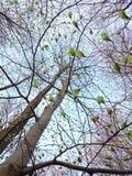 Βλαστάνοντας πράσινα φύλλα στοκ φωτογραφίες