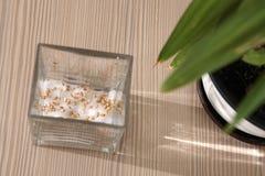 Βλαστημένα σιτάρια σίτου Στοκ Εικόνα