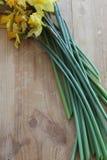 Βλαστημένη περικοπή daffodils Στοκ φωτογραφία με δικαίωμα ελεύθερης χρήσης