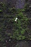 Βλαστοί νεαρών βλαστών από τα βρύα στους φλοιούς δέντρων στοκ εικόνες