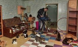 Βλαστοί Videographer για την τηλεόραση στο καταφύγιο γατών Στοκ Φωτογραφίες