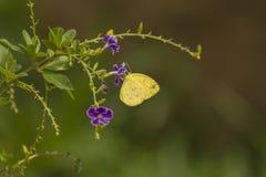 βλαστός φυτών κήπων πτώσης πεταλούδων Στοκ Φωτογραφίες