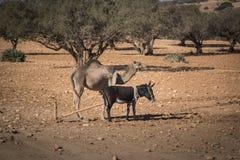 Γάιδαρος και καμήλα Στοκ εικόνα με δικαίωμα ελεύθερης χρήσης
