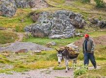 γάιδαρος Περού στοκ φωτογραφία με δικαίωμα ελεύθερης χρήσης