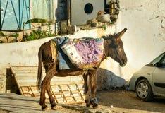 Γάιδαρος στην οδό σε Moulay Idriss Zerhoun, Μαρόκο Στοκ Εικόνες