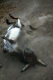 γάιδαρος στοκ φωτογραφία
