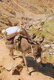 Γάιδαρος με μια τσάντα στα βουνά του Ουζμπεκιστάν στοκ εικόνες
