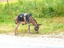 Γάιδαρος στο δρόμο Στοκ Εικόνες