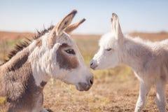Γάιδαρος Mom και μωρών Στοκ Φωτογραφία