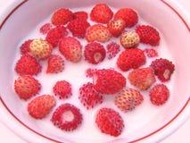γάλα μούρων στοκ εικόνα με δικαίωμα ελεύθερης χρήσης