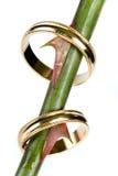 γάμος αγκαθιών Στοκ Φωτογραφία