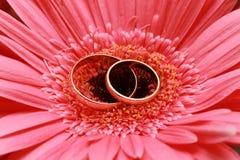 γάμος δαχτυλιδιών στοκ φωτογραφία με δικαίωμα ελεύθερης χρήσης
