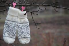 Γάντια στο δέντρο Στοκ εικόνες με δικαίωμα ελεύθερης χρήσης