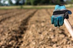 Γάντια στο αγρόκτημα καλαμποκιού Στοκ φωτογραφίες με δικαίωμα ελεύθερης χρήσης