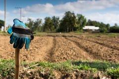 Γάντια στο αγρόκτημα καλαμποκιού Στοκ εικόνες με δικαίωμα ελεύθερης χρήσης