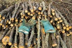 Γάντια στο σωρό του κλάδου πριονιών Στοκ εικόνες με δικαίωμα ελεύθερης χρήσης